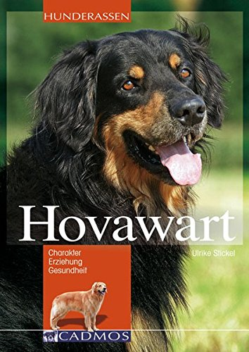 Hovawart  Charakter Erziehung Und Gesundheit  Cadmos Hunderassen