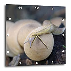 3D Rose Canada - Vancouver. Pear-Shaped Puffball - Reticulate Taildropper slug Wall Clock 10 x 10