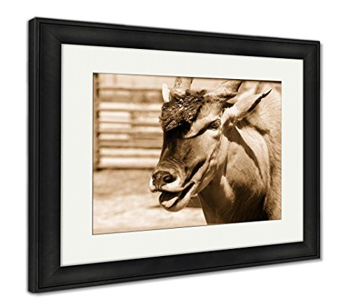 Antelope Framed (Ashley Framed Prints Antelope Eland Animal, Wall Art Home Decoration, Sepia, 34x40 (frame size), Black Frame, AG6213397)