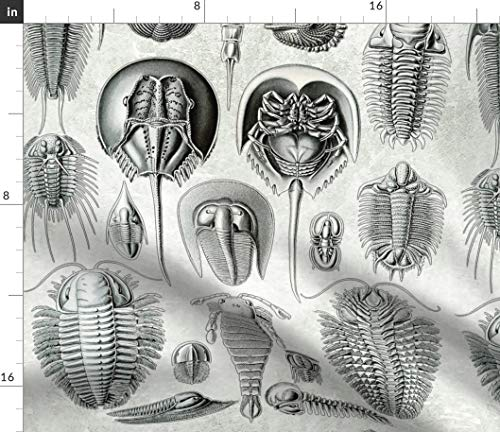 Horseshoe Crab Fabric - Mollusks Ernst Haeckel Mollusk Fossils Black and White Nautical Vintage Antique Print on Fabric by The Yard - Sport Lycra for Swimwear Performance Leggings Apparel Fashion (Fossil Crab)