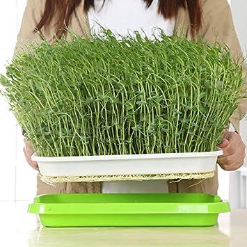 per Uso Domestico e Giardinaggio 1pc Doppio Piatto di germinazione per Colture idriche e Semi in plastica Vassoio per germinazione di Semi MIBANG Durevole per piantare Fiori e Verdure