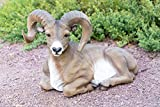 Alpine Bighorn Sheep Statue, 15 Inch Tall Review