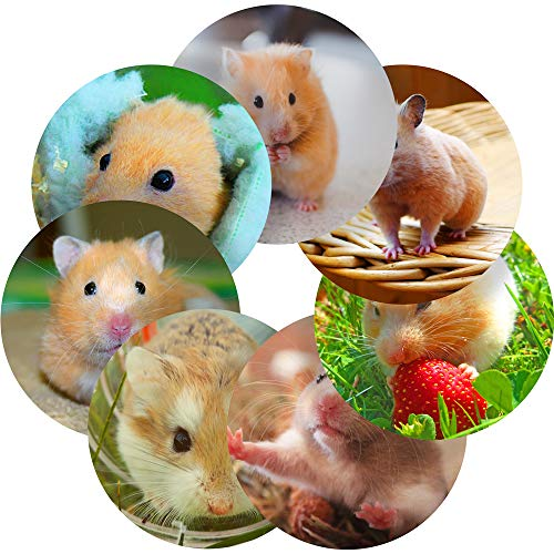 (Hamsters Reward Sticker Labels, 70 Stickers @ 1