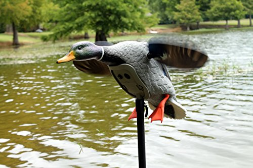 MOJO Outdoors Mojo King Mallard Spinning Wing Duck Decoy (New for 2017) by MOJO Outdoors (Image #5)