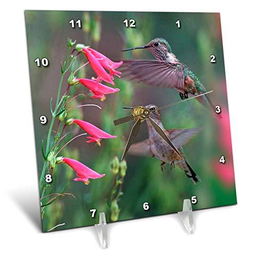 3dRose Danita Delimont - Hummingbirds - Juvenile Ruby-Throated Hummingbirds, Archilochus colubris, Texas - 6x6 Desk Clock (dc_315066_1)