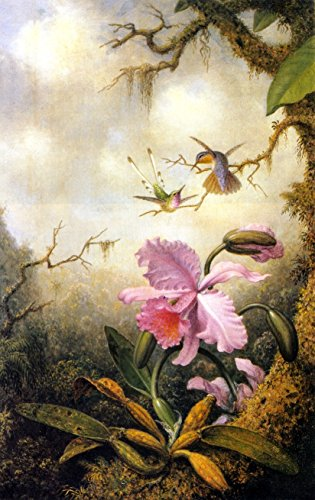hummingbirds-and-orchids-by-martin-johnson-heade-canvas-prints-8-by-13-unframed