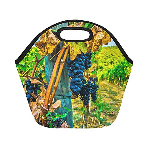 Insulated Neoprene Lunch Bag Grape Wine Grapes Vine Red Wine Wine Road Large Size Reusable Thermal Thick Lunch Tote Bags For Lunch Boxes For Outdoors,work, Office, (Metro Wine Box)