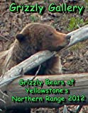 Grizzly Gallery: Grizzly Bears Of Yellowstone's Northern Range 2012