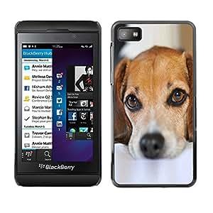 - MUTT MONGREL CUTE SAD PET DOG PUPPY - - Monedero pared Design Premium cuero del tir???¡¯???€????€?????n magn???¡¯&Atil