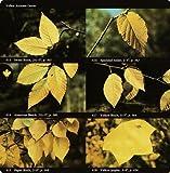 Audubon Society Field Guide to North American Trees:  Eastern Region