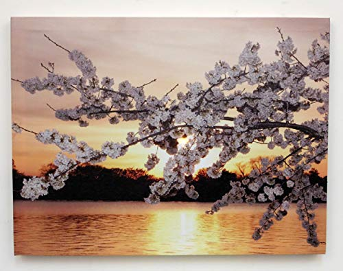 (Little Valley Lighted Canvas Cherry Blossom Sunset with Timer LED 12