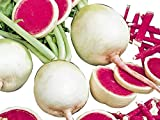 100+ ORGANICALLY Grown Watermelon Shinrimei Radish Seeds, Heirloom Non-GMO, Pink, Spicy, Tasty, Rare, from USA