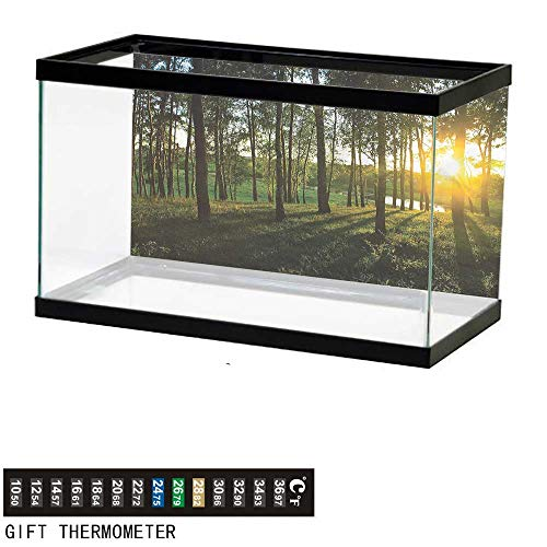 bybyhome Fish Tank Backdrop Forest,Autumn Sunset in The Woods,Aquarium Background,60