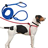 Best Dog Harness No Pulls - Harness Lead Escape Proof, Reduces Pull Dog Harness Review