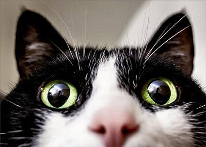 Amazon Close Up Cat Avanti Funny Birthday Card Office Products