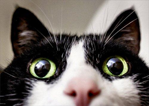 (Close Up Cat - Avanti Funny Birthday Card)