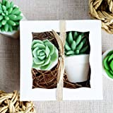 Succulent Handmade SOAP Gift Set Women for Garden Lovers/Birthday/Christmas/Under 30