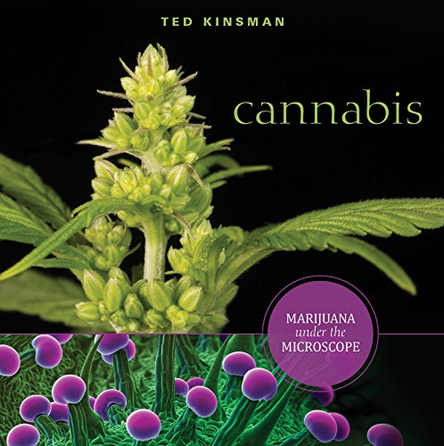 Cannabis  Marijuana Under The Microscope