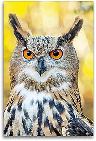 CALVENDO Lienzo de 60 cm x 90 cm de Alto. Retrato de un uhus Vigilante sobre Fondo otoñal Imagen de Pared, Imagen sobre Bastidor. Uhu (Bubo Bubo), España Animales, Animales: CALVENDO: Amazon.es: