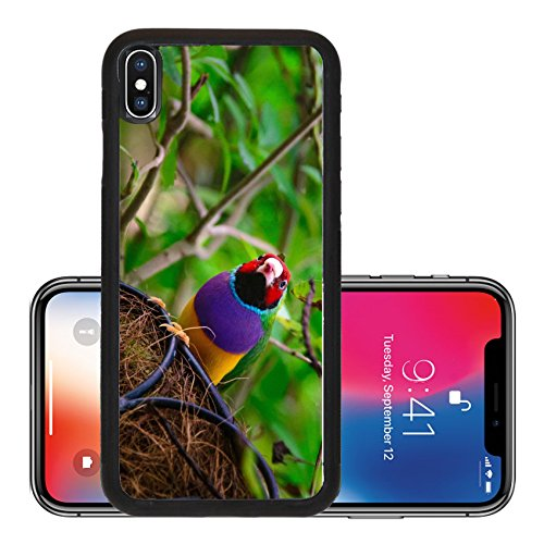 Liili Premium Apple iPhone X Aluminum Backplate Bumper Snap Case ID: 22228978 Low angle view of a Gouldian Finch Erythrura gouldiae in its nest Key West Monroe County Florida - Stores West County
