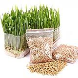 Portal Cool 400 Cat Grass Seeds, Dog Oats, Antioxidant Pets Health Food, Avena Sativam