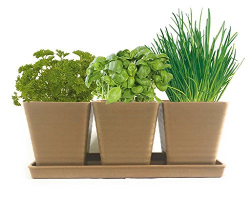 Grow 5 Herbs with Burpee's Herb Garden Starter Kit - Parsley, Cilantro, Chives, Basil and Oregano. Complete Kit with Everything Needed to Grow Culinary Plants indoors. (Tan) Cilantro Garden Grow Pot