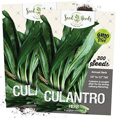 culantro plants