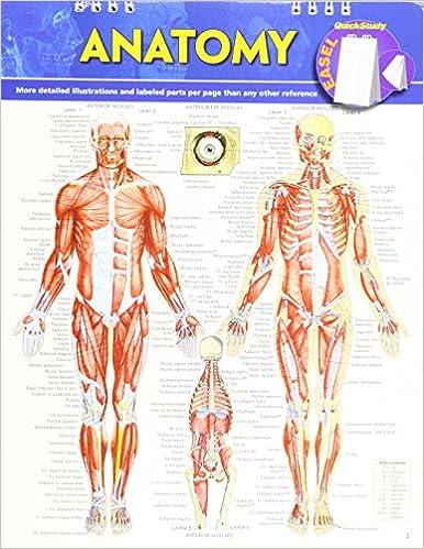 Anatomy Quick Study Easel 0654614025838 Medicine Health