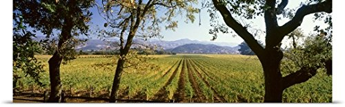 Poster Print entitled Vines in a vineyard, Far Niente Winery, Napa Valley, California,
