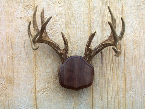 The Taxidermists Woodshop Black Walnut