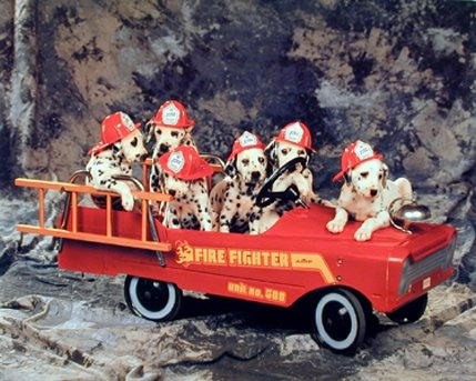 Dalmatian Puppies in Fire Truck Dog Animal Wall Decor Art Print Poster (16x20)
