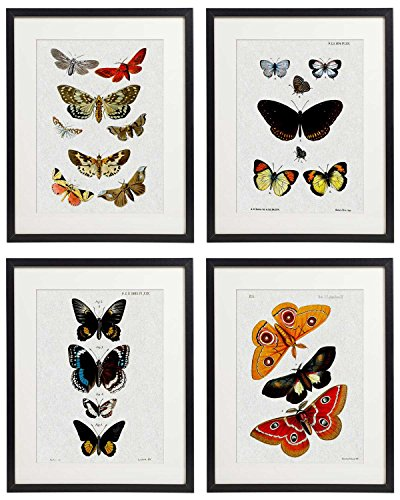 - IDIOPIX Vintage Insect Butterfly Moth Home Decor Wall Art Print Set of 4 Prints UNFRAMED No.10