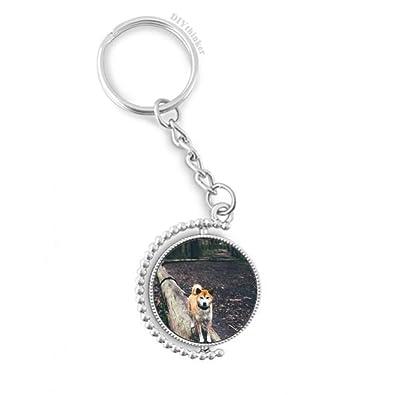 DIYthinker Mascotas Perro japonés del Cuadro del Animal ...