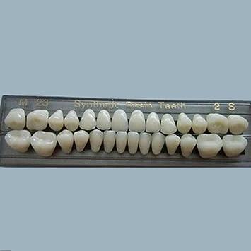 Amazon com: One Set Dental False Tooth Teeth Denture M32