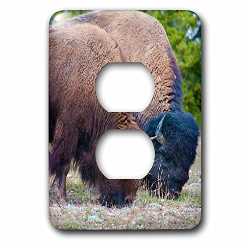 Bison Grass - 3dRose Jos Fauxtographee- Bison Black and Brown - Two Bison grazing on grass in Yellowstone one tan and black - Light Switch Covers - 2 plug outlet cover (lsp_263423_6)