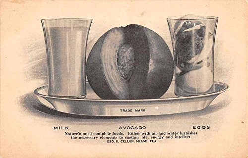 Miami Florida Milk Avocado Eggs Food Advertising Antique Postcard J77857