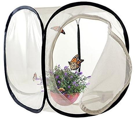 Jaula de insectos y mariposas para terrario (30, 5 x 30, 5 x 30, 5 ...
