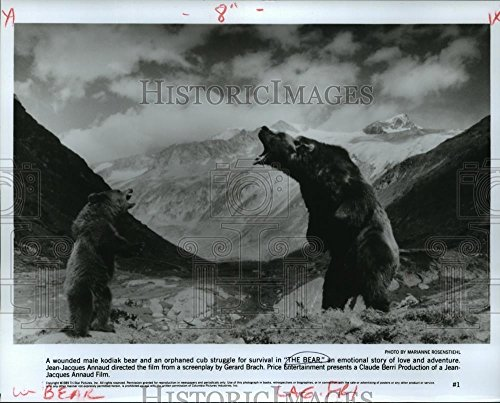 Press Photo Kodiak Bears in Jean-Jacques Annaud Film The Bear ()