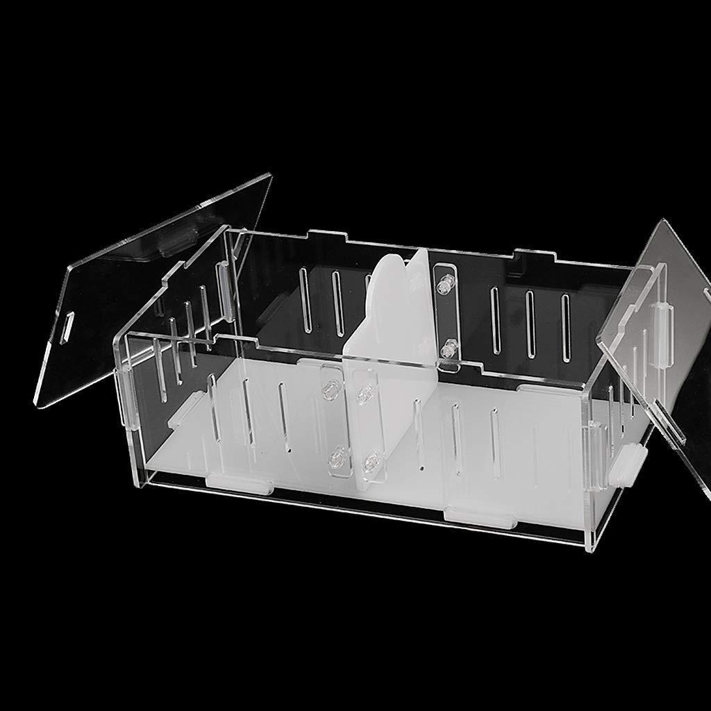 F Fityle Caja De Lucha De Grillos De Acrílico Transparente, Jaula ...