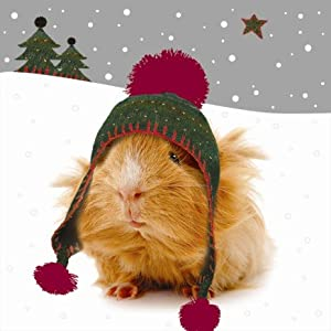 Crazy Christmas Guinea Pigs Luxury Christmas Cards Pack: Amazon.co ...