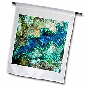 3dRose fl _ 73283_ 1vida marina, Giant Clam, Gran Barrera de Coral, Australia-au01dwa3056-david pared jardín bandera, 12por 45,72cm