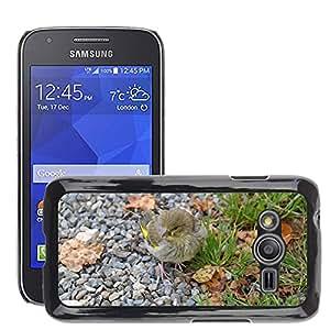 Etui Housse Coque de Protection Cover Rigide pour // M00129863 Verderón Pájaro Fink // Samsung Galaxy Ace4 / Galaxy Ace 4 LTE / SM-G313F