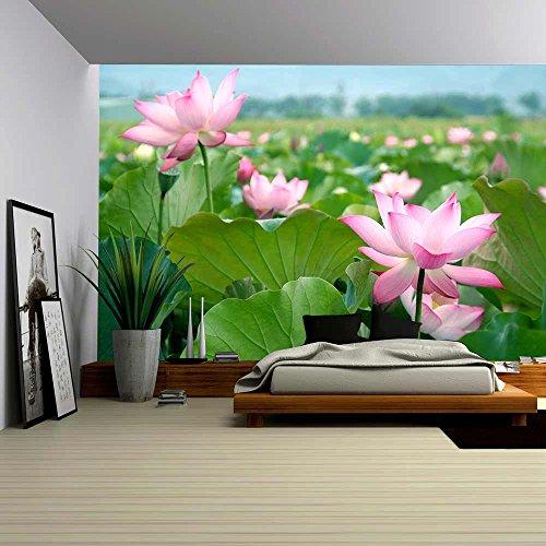 Lotus Flower Blossom