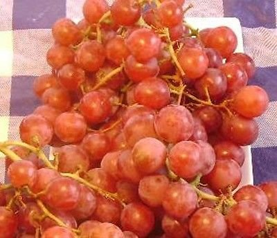 "Red Globe /""do it all/"" Grape Vine 1 gallon Live Plant Home Garden Easy to Grow"