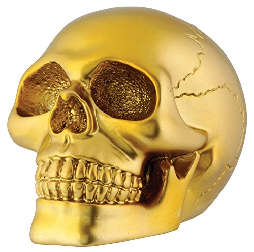 Skull Collectible Skeleton Decoration Figurine