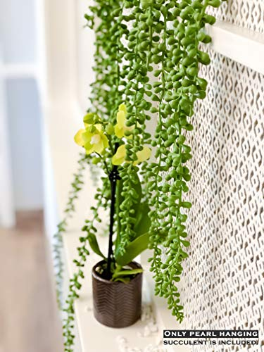 Artificial Succulent plant - Hanging String of Pearl 5 Pieces - Home Kitchen Office Bathroom Room Decor - Fake Succulents, Plants, Hanging Flower Wedding Home Kitchen Decor Garden Outdoor Greenery from Valley Supply Global