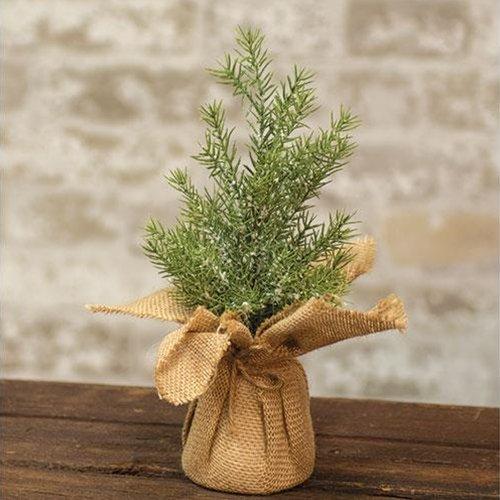 Heart of America Mini Snowy Rosemary Pine Tree 11''