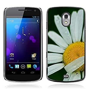 Hot Style Cell Phone PC Hard Case Cover // M00307960 White Flower Daisy // Samsung Galaxy Nexus GT-i9250 i9250