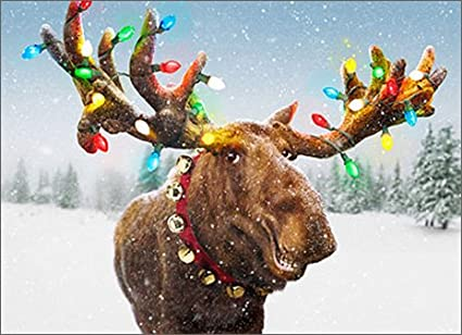 decorated moose antlers box of 10 avanti funny christmas cards