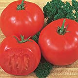 buy Burpee 'Super Beefsteak' | Red Beefsteak Slicing Tomato | 175 Seeds now, new 2019-2018 bestseller, review and Photo, best price $7.69